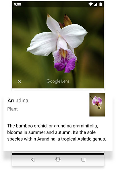 Phone screen displaying Google Lens feature on Android One